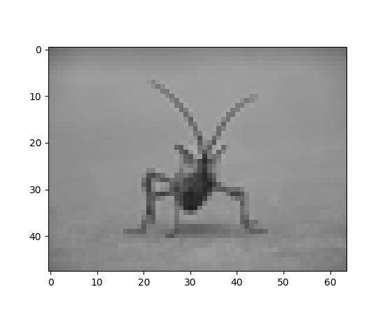 Image tutorial — Matplotlib 2 0 2 documentation